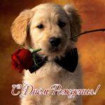 Открытка с днём рождения с собачкой скачать бесплатно на сайте otkrytkivsem.ru