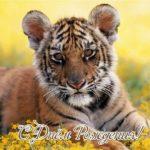 Открытка с днём рождения с тигром скачать бесплатно на сайте otkrytkivsem.ru