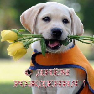 Открытка с днём рождения женщине с собаками скачать бесплатно на сайте otkrytkivsem.ru