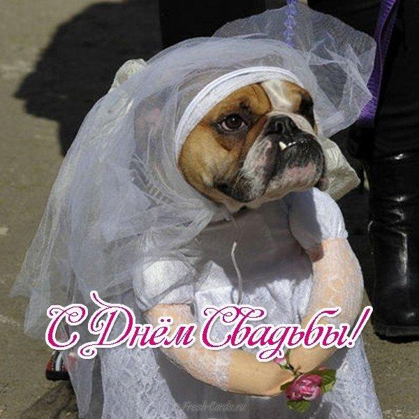 Открытка с днём свадьбы прикольная смешная скачать бесплатно на сайте otkrytkivsem.ru