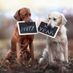Открытка с новым годом 2018 собаки прикольная скачать бесплатно на сайте otkrytkivsem.ru