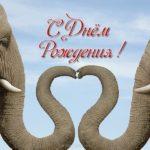 Открытка с слоном с днем рождения скачать бесплатно на сайте otkrytkivsem.ru