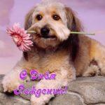 Открытка с собачками на день рождения скачать бесплатно на сайте otkrytkivsem.ru
