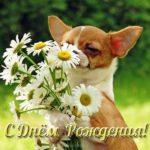 Открытка с собаками на день рождения скачать бесплатно на сайте otkrytkivsem.ru