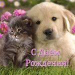 Открытка щенок с днем рождения скачать бесплатно на сайте otkrytkivsem.ru