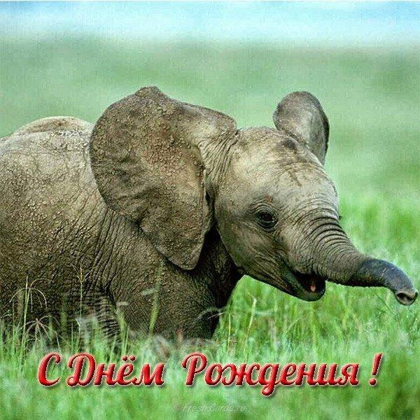otkrytka slon s dnem rozhdeniya