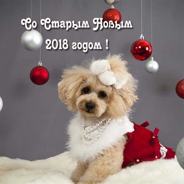 Открытка со старым новым годом собаки скачать бесплатно на сайте otkrytkivsem.ru
