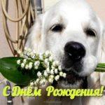 Открытка собачка с днём рождения скачать бесплатно на сайте otkrytkivsem.ru