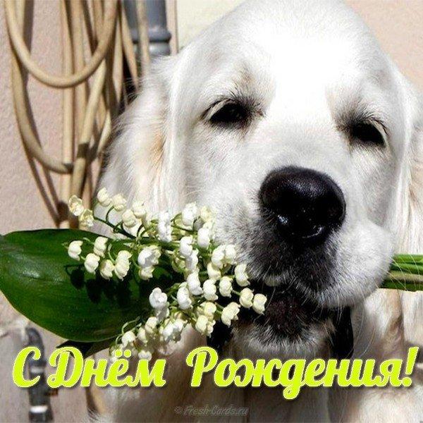 Гифка, хочу собаку открытка