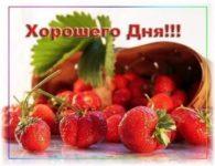 Пожелания хорошего дня и доброго утра девушке скачать бесплатно на сайте otkrytkivsem.ru
