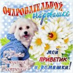 Поздравить сестру с днем рождения в открытке скачать бесплатно на сайте otkrytkivsem.ru