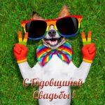 Поздравительная открытка с днем свадьбы прикольная скачать бесплатно на сайте otkrytkivsem.ru