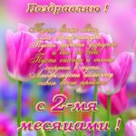 Поздравление с 2 месяцами девочке открытка скачать бесплатно на сайте otkrytkivsem.ru