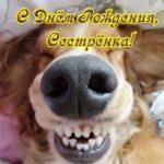 Прикольная открытка для сестры с днем рождения скачать бесплатно на сайте otkrytkivsem.ru
