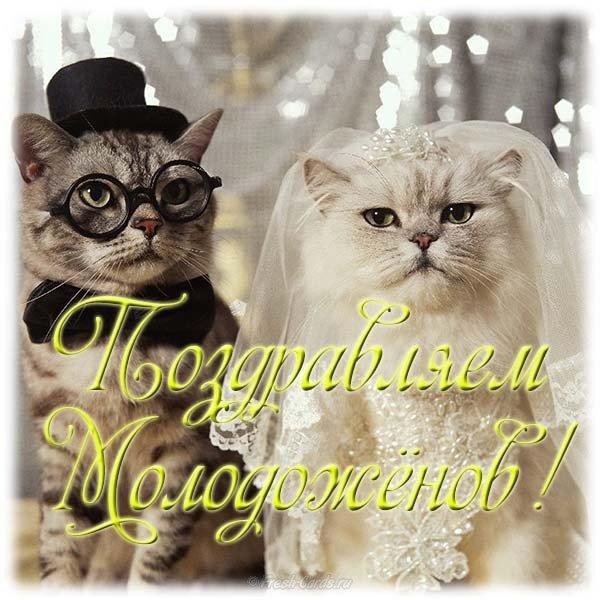 Прикольные, картинки с юбилеем свадьбы прикольные смешные