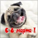 Прикольная открытка на 8 марта скачать бесплатно на сайте otkrytkivsem.ru