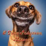 Прикольная открытка с днём рождения коллеге скачать бесплатно на сайте otkrytkivsem.ru