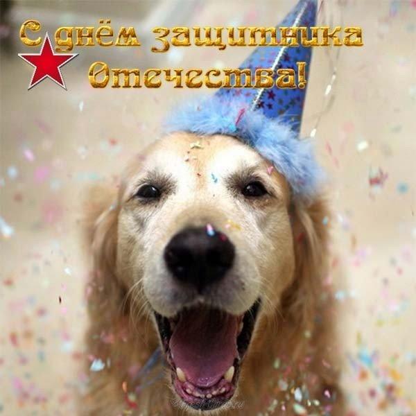 shutochnaya pozdravitelnaya otkrytka s fevralya muzhchinam