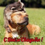 Смешная открытка с днем свадьбы скачать бесплатно на сайте otkrytkivsem.ru