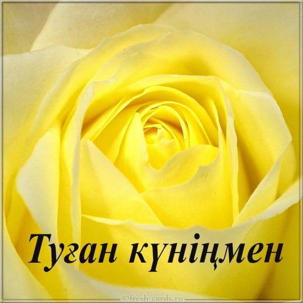 Картинка цветок на день рождения с надписью на Казахском
