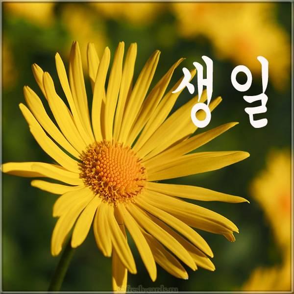 Открытка с цветком на день рождения на Корейском