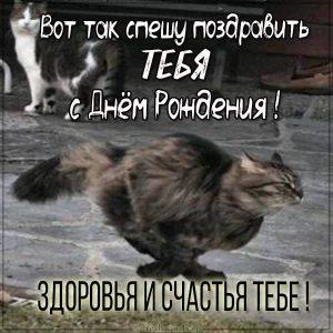 Прикольная открытка с днем рождения с кошаком