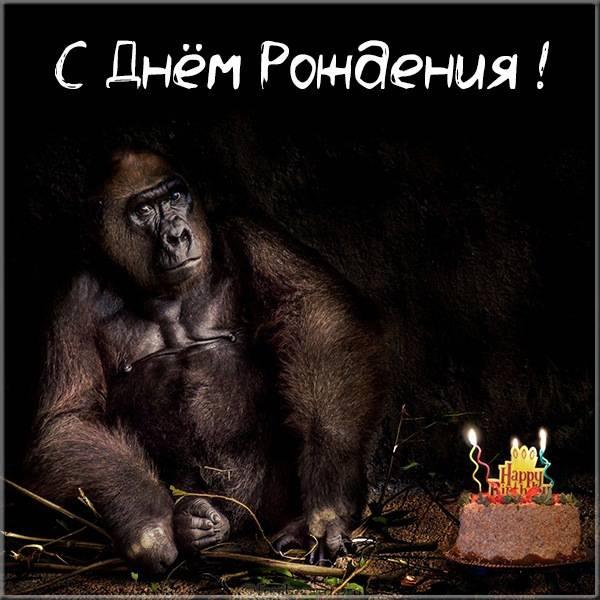 Прикольная открытка с обезьяной на день рождения