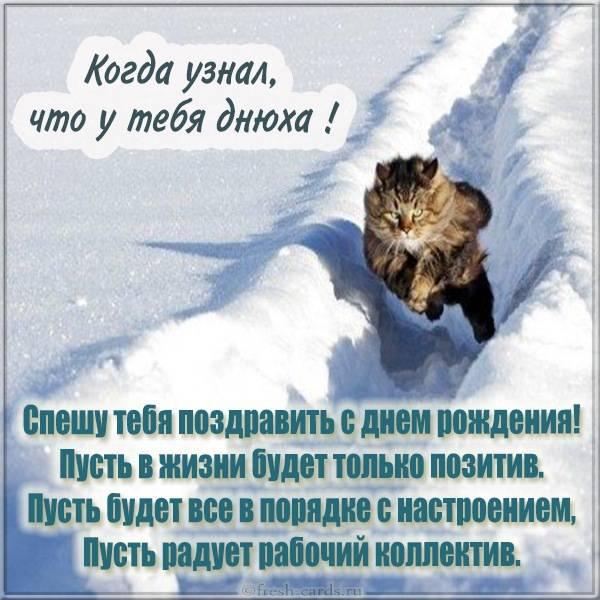 Прикольная зимняя открытка с котом на день рождения