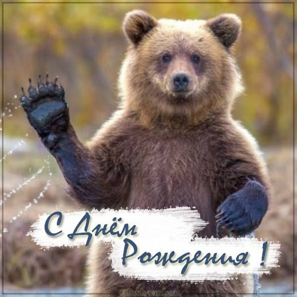 Прикольная открытка на день рождения от медведя