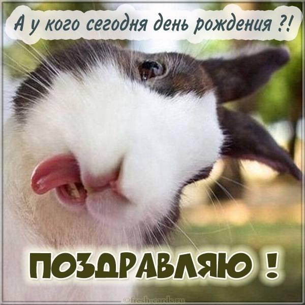 Прикольная картинка на день рождения от кролика