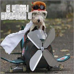 Прикольная картинка с поздравлением на день авиации