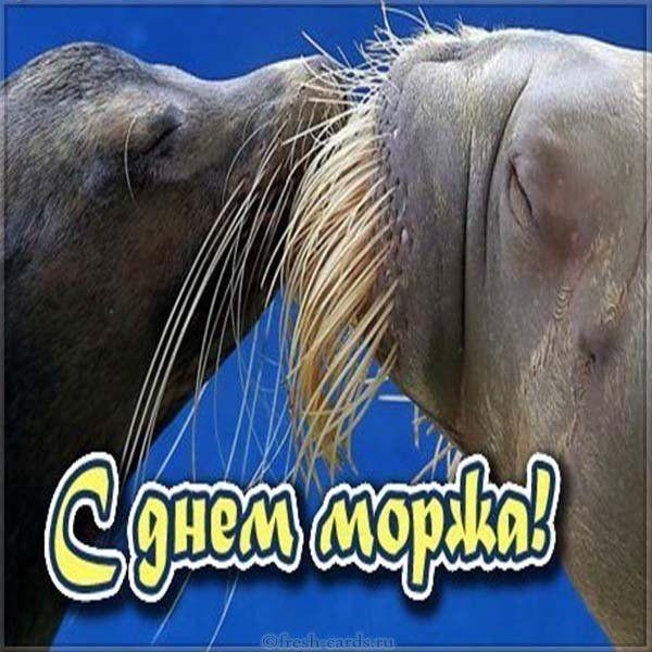 Прикольная картинка поздравляем с днем моржа