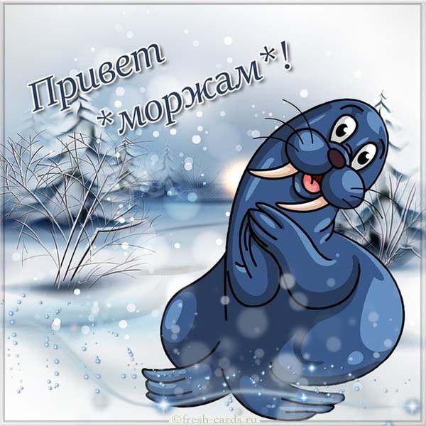 Красивая открытка с приветом на день моржа