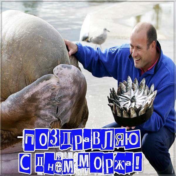 Поздравительная картинка на день моржа