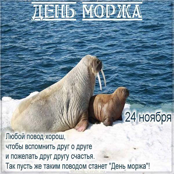 Поздравительная открытка на день моржа в электронном виде