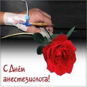 Трогательная картинка на день анестезиолога с розой