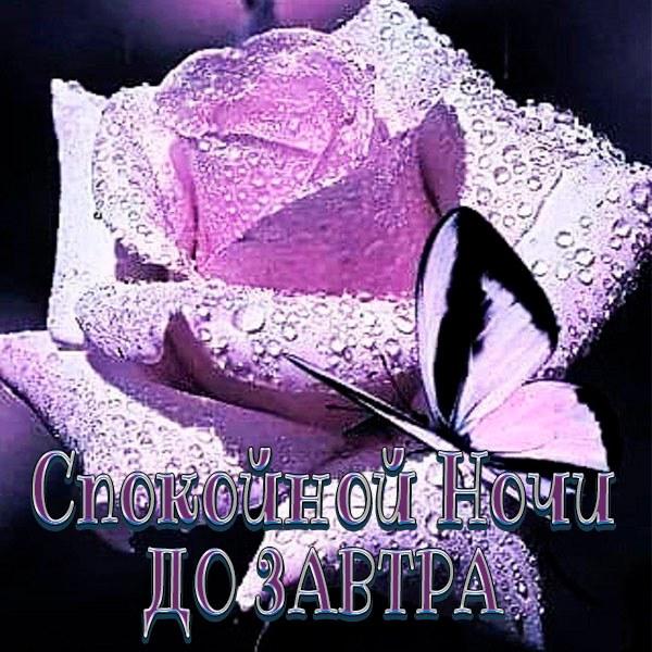 Бесплатная электронная картинка спокойной ночи до завтра - скачать бесплатно на otkrytkivsem.ru