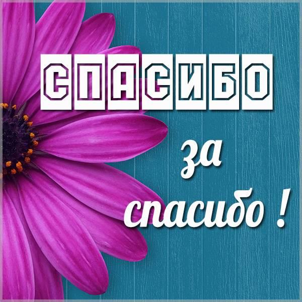 Бесплатная картинка спасибо за спасибо - скачать бесплатно на otkrytkivsem.ru