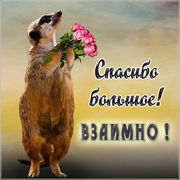 Бесплатная открытка спасибо большое а также взаимно - скачать бесплатно на otkrytkivsem.ru