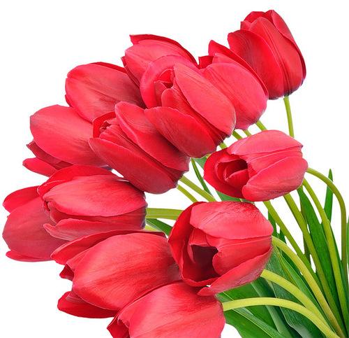 Букет тюльпанов фото - скачать бесплатно на otkrytkivsem.ru