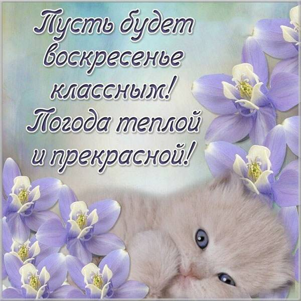 Электронная открытка с добрым воскресным днем - скачать бесплатно на otkrytkivsem.ru