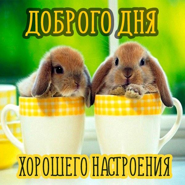 Фото доброго дня и хорошего настроения прикол - скачать бесплатно на otkrytkivsem.ru