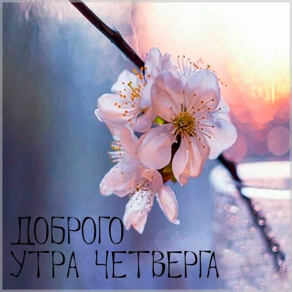 Фото доброго утра четверга - скачать бесплатно на otkrytkivsem.ru