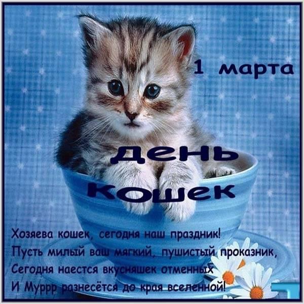 Фото картинка на день кошек - скачать бесплатно на otkrytkivsem.ru
