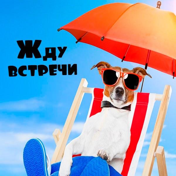 Фото ожидание встречи - скачать бесплатно на otkrytkivsem.ru