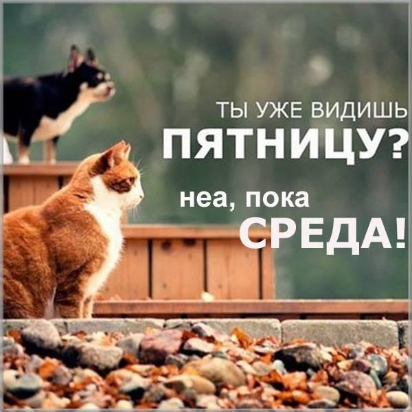 Фото прикол о среде - скачать бесплатно на otkrytkivsem.ru