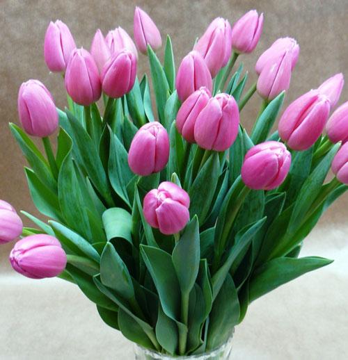 Фотография тюльпанов с 8 марта - скачать бесплатно на otkrytkivsem.ru
