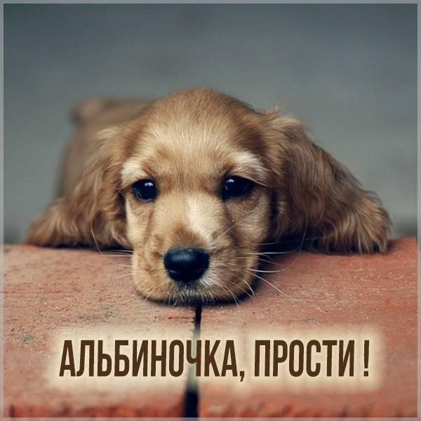 Картинка Альбиночка прости - скачать бесплатно на otkrytkivsem.ru
