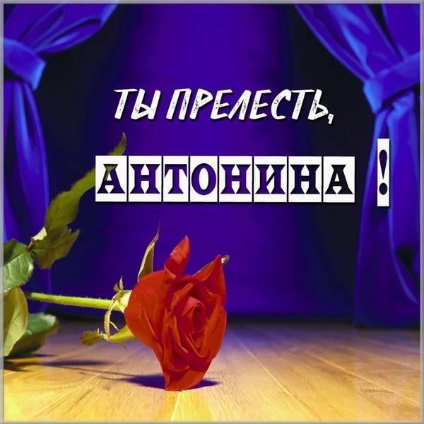 Картинка Антонина ты прелесть - скачать бесплатно на otkrytkivsem.ru