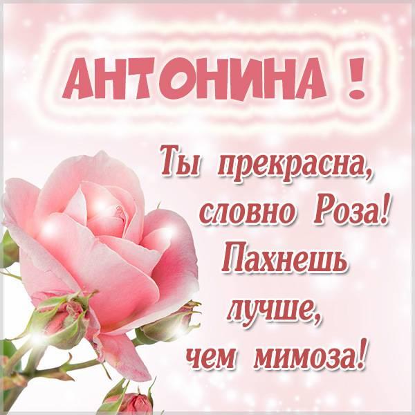 Картинка Антонине - скачать бесплатно на otkrytkivsem.ru